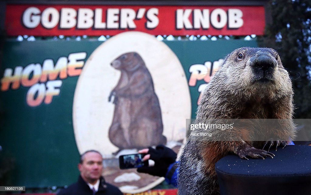 Groundhog Punxsutawney Phil climbs on the top hat of his handler after Phil did not see his shadow and predicting an early spring during the 127th Groundhog Day Celebration at Gobbler's Knob on February 2, 2013 in Punxsutawney, Pennsylvania. The Punxsutawney 'Inner Circle' claimed that there were about 35,000 people gathered at the event to watch Phil's annual forecast.