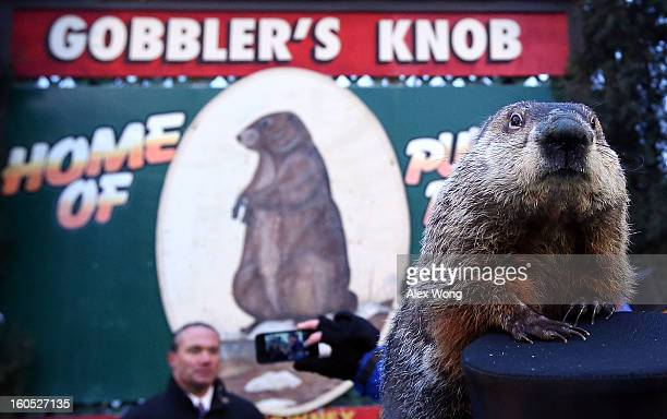Groundhog Punxsutawney Phil climbs on the top hat of his handler after Phil did not see his shadow and predicting an early spring during the 127th...