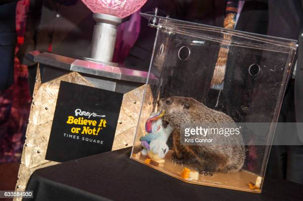 Groundhog Staten Island Chuck attends the unveiling of new interactive exhibit featuring Original 2007 Times Square New Year's Eve Centennial Ball at...