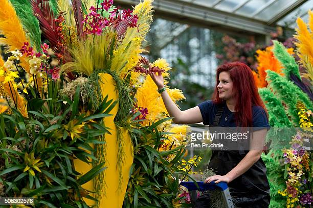 A grounds keeper completes the finishing touches to the carnival dancers in the pond which is made up of Phalaenopsis Bromeliads Cambrias and...