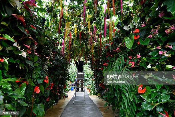 A grounds keeper completes the finishing touches to the tunnel made purely from tropical plants which is part of the Kew Gardens Orchid Festival at...