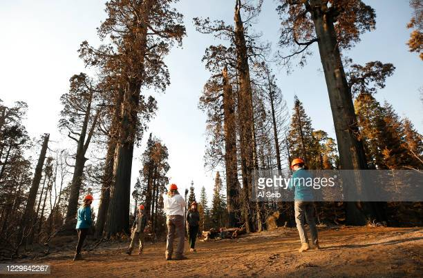 Group from Save The Redwoods League observes the 530 acres of the privately owned Alder Creek grove that Save the Redwoods League purchased less than...