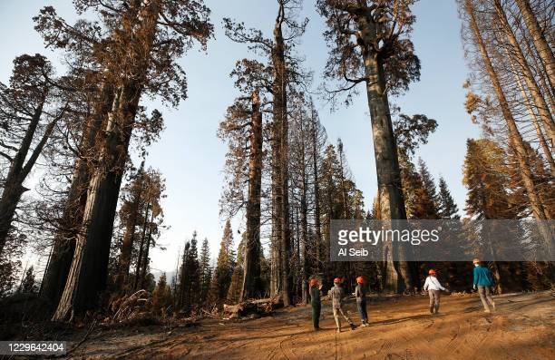 Group from Save The Redwoods League walk through the 530 acres of the privately owned Alder Creek grove that Save the Redwoods League purchased less...