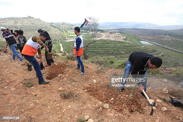 A group gathering in Qaryut village located in southeast of Nablus West Bank on March 15 plant olive tree as they mark the 12th anniversary of the...