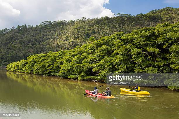 a group kayaking in a river lined with mangroves - mangroves stock pictures, royalty-free photos & images