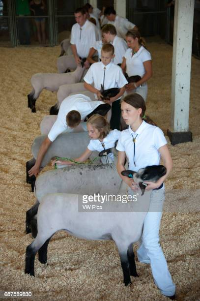 Group of 4H youth standing in a row inside a pen waiting to be judged with their Suffolk sheep at the Maryland State Fair