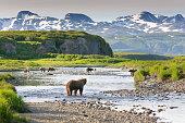 Group of Alaska Brown Bears Fishing Salmon at McNeil River