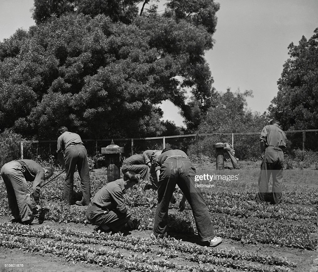 Anti-Nazi War Prisoners Working in Victory Garden : News Photo