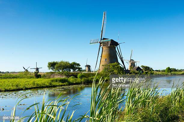 Group of authentic windmills at Kinderdijk UNESCO World Heritage Site polder ducks on dyke Netherlands The Netherlands