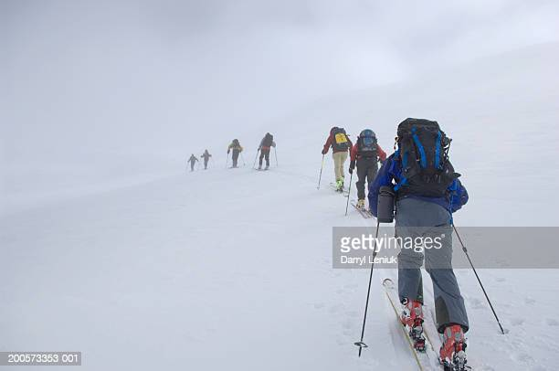 Group of backcountry skiers climbing slope, rear view