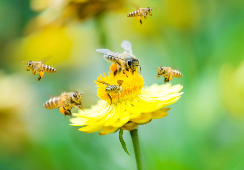 Group of bees on a flower 164713067