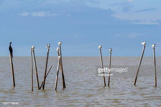 Group of birds sitting on the bamboo perch at lake Thale Noi, Phatthalung, Thailand.