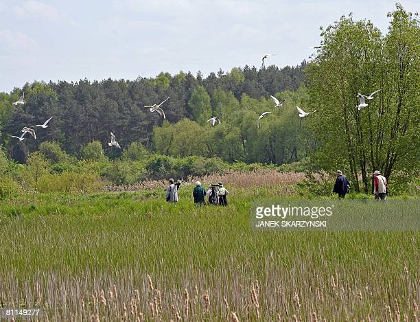 A group of British bird watchers walk in Biebrza National Park on May 16 2008 The park which with a total of 59233 hectares is the country's largest...
