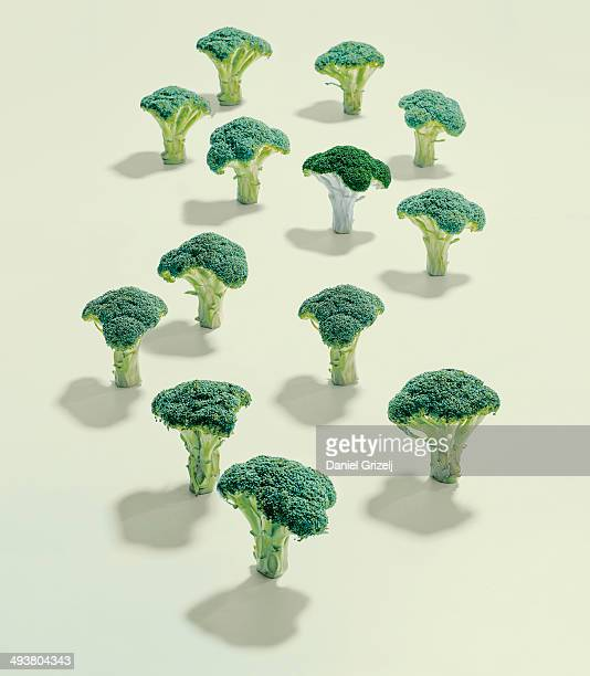 A group of broccoli