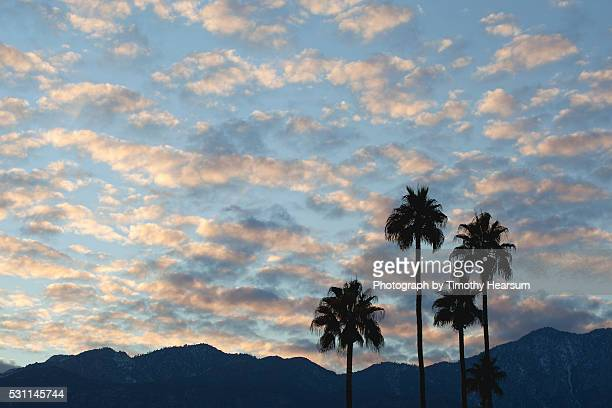 a group of california fan palms with mountains, clouds and sky beyond - timothy hearsum stock-fotos und bilder