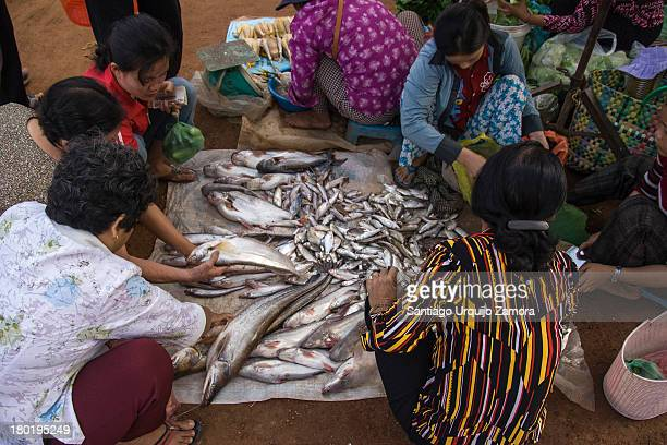 Group of Cambodian women buying fresh fish from a blanket on the ground at the Psar O Russei market in Phnom Penh, Cambodia