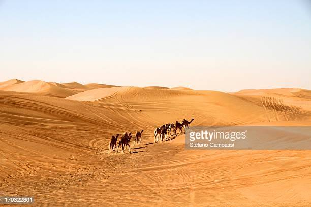 CONTENT] Group of camels in the desert near Dubai