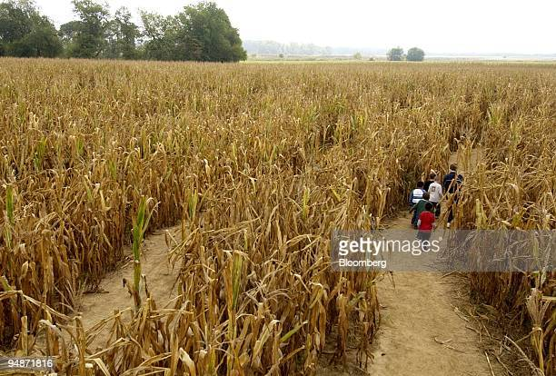 A group of children and adults walk through the Corn Maze at Scarecrow Hollow in Salem New Jersey Wednesday October 5 2005