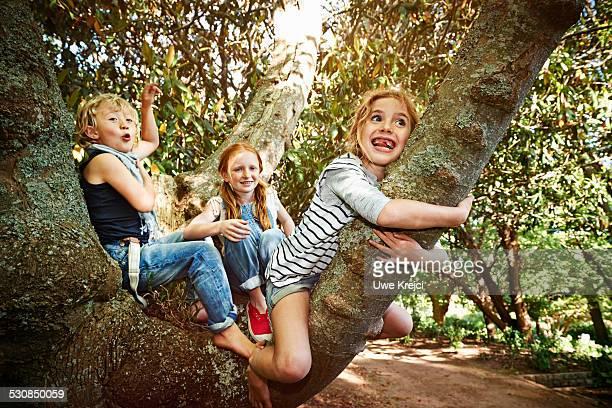 Group of children climbing a tree