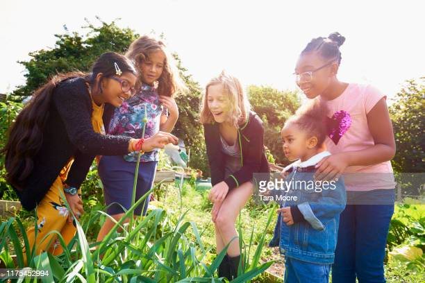 group of children looking plant in allotment - urban garden stock pictures, royalty-free photos & images