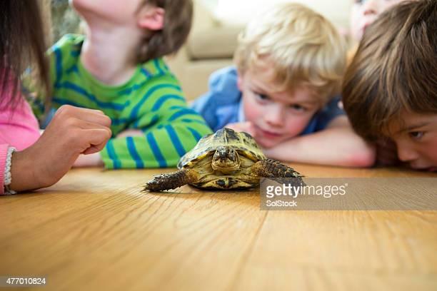 Gruppe von Kindern durch Beobachten einer Schildkröte.