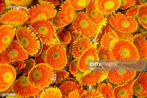 A Group of Colorful Orange and Yellow Flowers