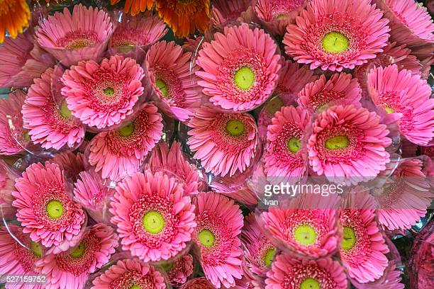 A Group of Colorful Pink and Green Flowers