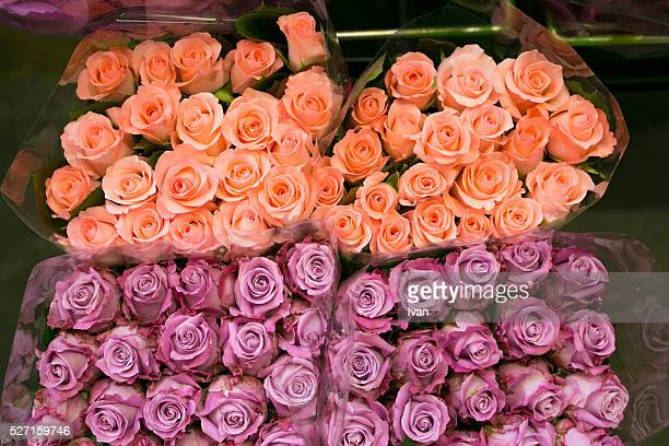 A Group of Colorful Pink and Purple Rose Flowers