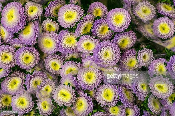 A Group of Colorful Purple and Yellow Flowers