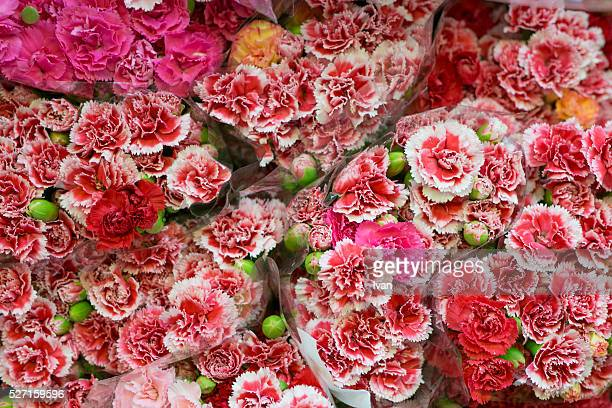 A Group of Colorful Red and White Rose Flowers