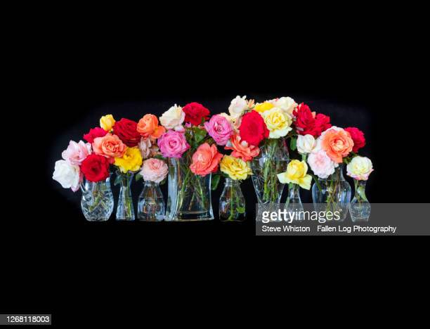 group of colorful roses in vases against a black background - red roses garden stock pictures, royalty-free photos & images
