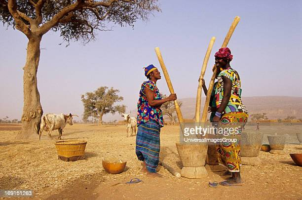 A group of colorfuly dressed Fulani women preparing millet near Gao Mali