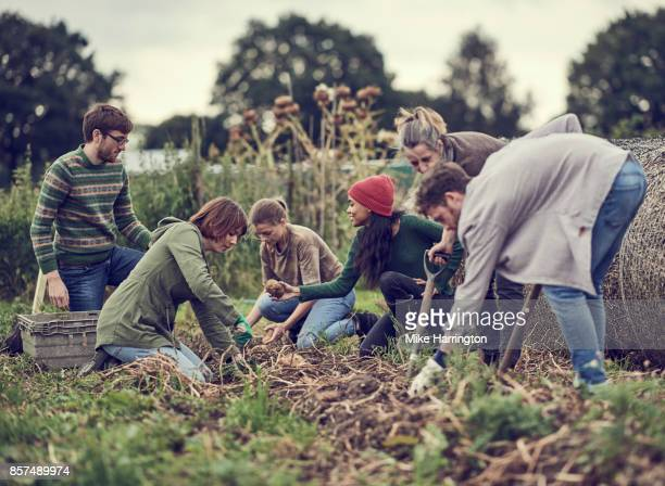 group of community farmers working on their allotment - self sufficiency stock pictures, royalty-free photos & images