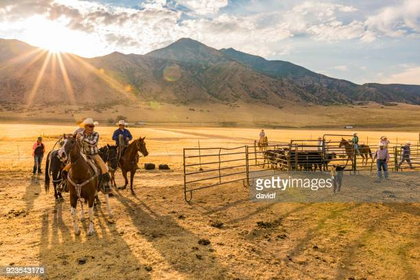 group of cowboys and cowgirls herding cattle - ranch stock pictures, royalty-free photos & images