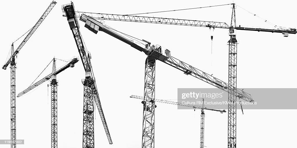Group of cranes : Stock Photo