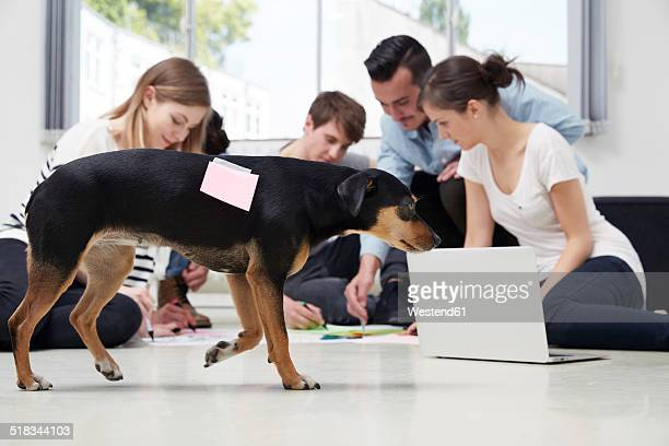 Group of creative professionals working on floor with dog passing by