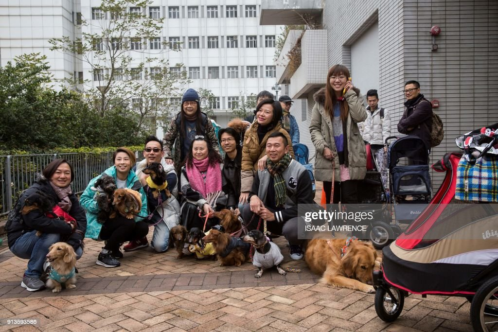 A group of dachshunds and their owners pose for a photo before taking part in the city's first 'Sausage Walk' in Hong Kong on February 3, 2018. In a city that likes to dress up its dogs, 50 dachshunds gathered in Hong Kong on February 3 wearing everything from patterned winter jumpers to dapper tweed. /