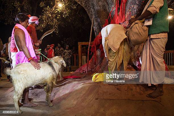 A group of devotees carry a goat to the main ritual area in the temple before the beginning of the animal sacrifices during the celebration of the...