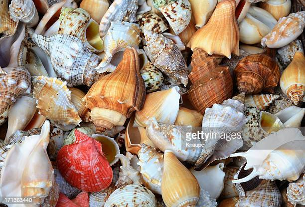group of different sea shells - seashell stock pictures, royalty-free photos & images
