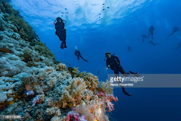 Group of divers are exploring a reef on May 01, 2017 off the Red Sea, Egypt.