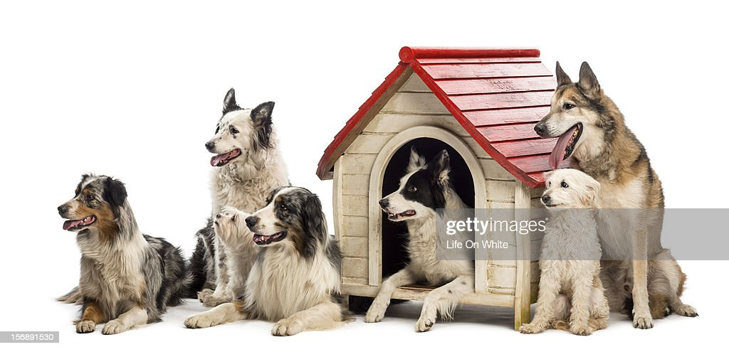 Group of dogs around a kennel : Stock Photo
