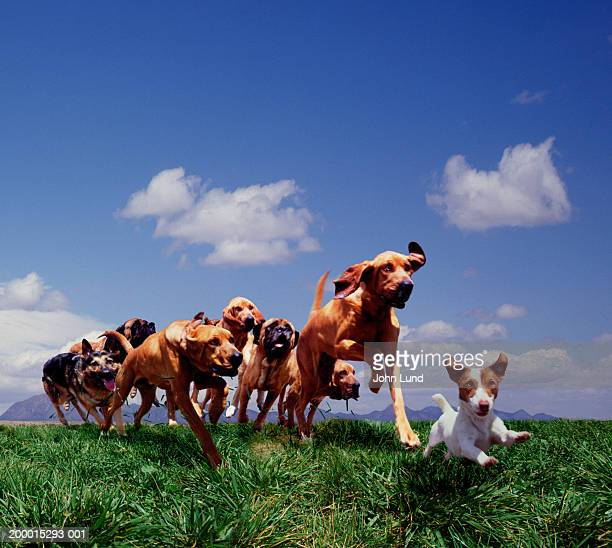 group of dogs running on grass (digital composite) - group of animals stock pictures, royalty-free photos & images