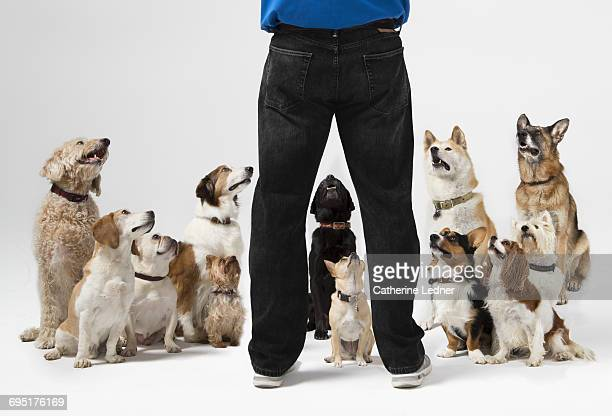 group of dogs sitting at attention