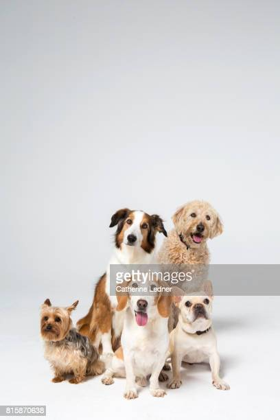 group of dogs sitting in white studio - un animal fotografías e imágenes de stock