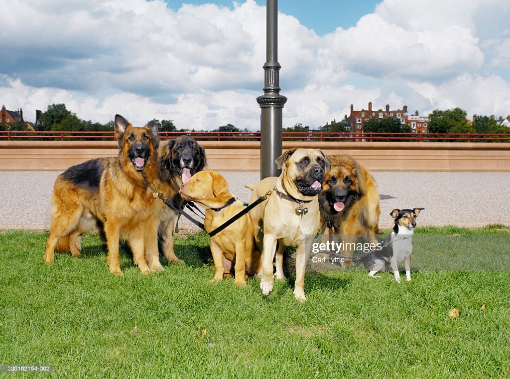Group of dogs tethered to lamp post : Stock Photo