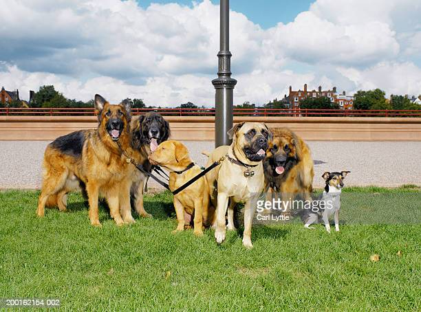 Group of dogs tethered to lamp post