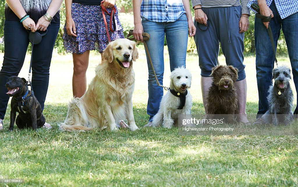 Group Of Dogs With Owners At Obedience Class : Stock Photo