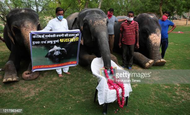A group of elephants garland a photograph of the female elephant that was killed in Kerala at Hathi Gaon on June 4 2020 in Jaipur India The pregnant...