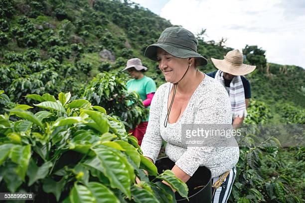 group of farmers collecting coffee beans - landwirtschaftliche tätigkeit stock-fotos und bilder