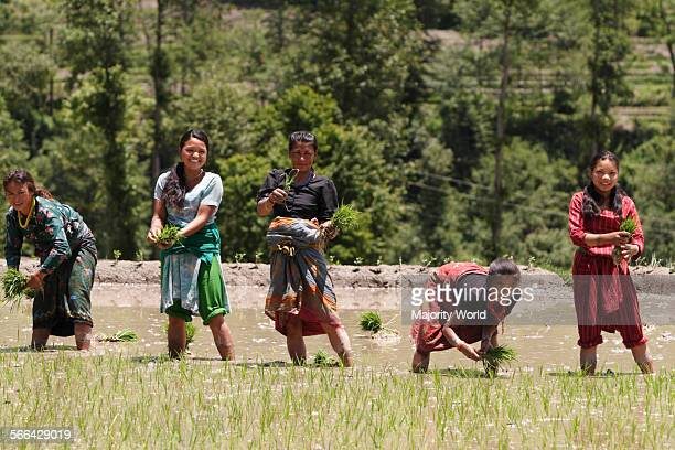 A group of female farmers plant paddy in Sankhu Nepal May 19 2007 Sankhu was once a significant town lying in the Kathmandu valley on the Tibetan...